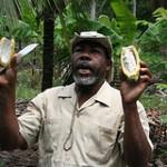 Führung auf einer Kakaoplantage