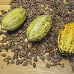 Kakaobohnen und Kakaofrüchte.